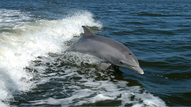 Dolphin Tours on Siesta Key