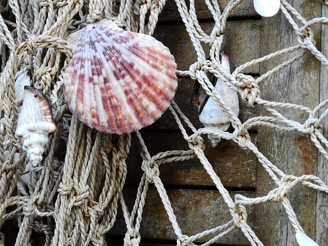 Seashell Net