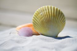 How to Identify Seashells on the Beach