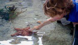 Kid experiencing the Mote Marine Aquarium