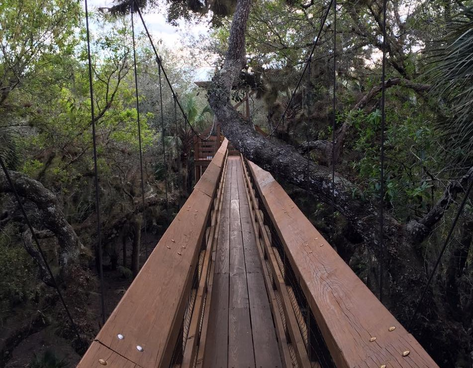 Myakka River State Park boardwalk in the trees