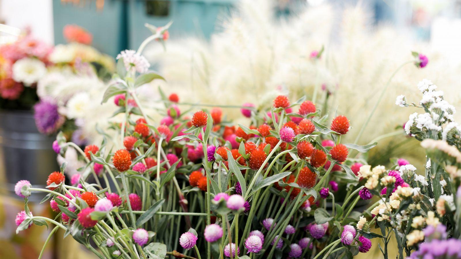 Flowers at Sarasota farmer's market