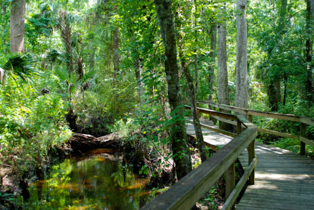 nature park trail
